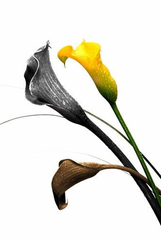 Fleurs 2012_005ED