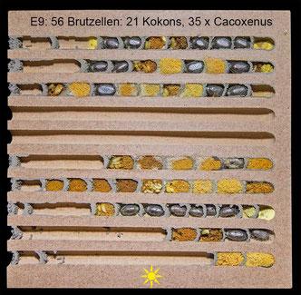Insektenhotel Nisthilfe Insektennisthilfe zerlegbar Nutbrettchen Mauerbiene Kokon Cacoxenus