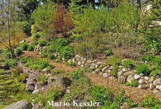 Totholz Naturgarten wildlife garden dead wood deadwood Hackschnitzel Hackschnitzelweg wood chips