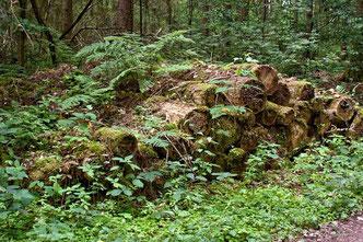Totholz Holzstapel Holzstoß Holzstoss Naturgarten wildlife garden wood pile log pile