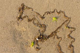 Strand Strandgut Sand