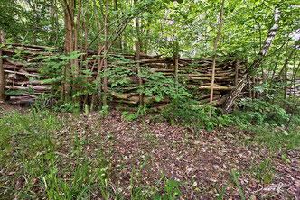Totholz Totholzzaun Naturerlebnisraum Kiesgrube Kasseedorf