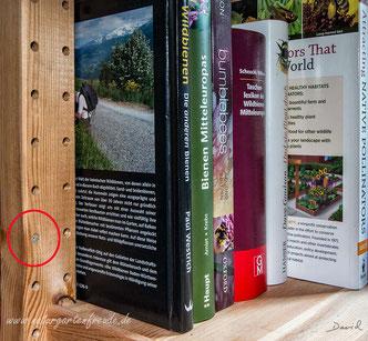 Mauerbiene Osmia Wildbiene Nistplatz wild bee mason bee solitary bee Bücherregel Ikea