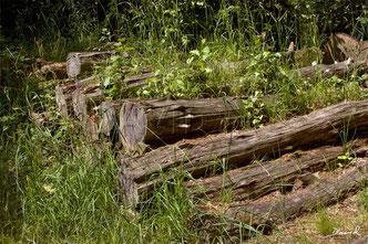 totholz im garten holzstapel wildbienenschutz im naturgarten. Black Bedroom Furniture Sets. Home Design Ideas