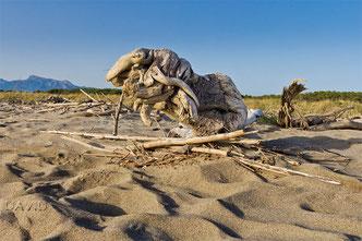 Strand Strandgut Treibholz Walroß