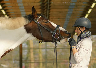 Ausbildung Pferde Beritt Reitlehrer Turniere Jungpferdeausbildung Wera Grommes TOS Dr. Grommes
