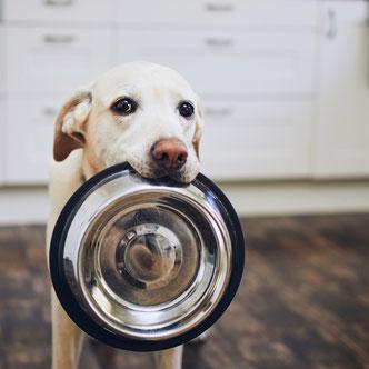 Boeken over honden eten