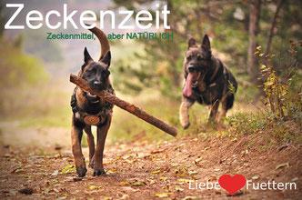 Zeckenmittel Hund & Katze - Zeckenschutz aber natürlich, natürlicher Zeckenschutz für Hunde & Katzen von Reico Vital.