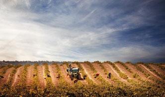 ワインのタイプが多様なワケ (www.vinetur.com)