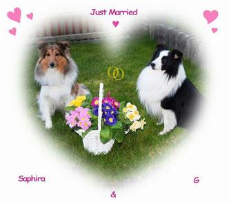 """Saphira wurde von """"G-star of desert meadow"""" gedeckt"""