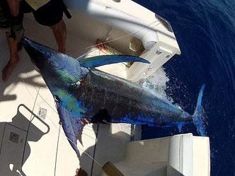 Seychellen angeln Trolling Marlin Landung