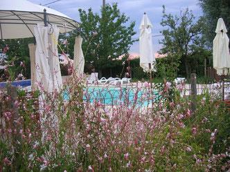 floraison autour de la piscine