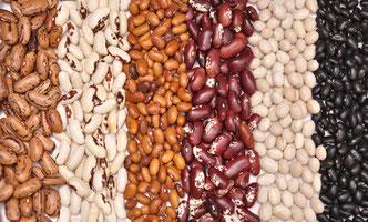 Samenfestes Saatgut - nachbaufähige Sorten