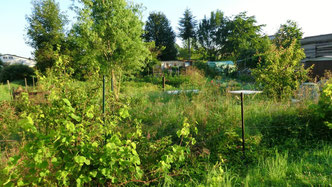 Garten mit PCB-Handbrunnen am 1. Juli 2014