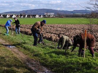 Die Pflanzen werden am Wegesrand eingegraben. - Foto: Kathy Büscher