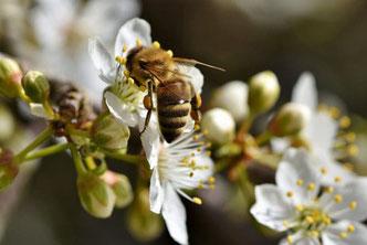 Nutzgarten, Wildgaren, Kräuterwiese, Blumenwiese, Vorgarten, Garten, Bienen, Bienenhotel, Wildbienen, Honigbienen, Nutzpflanzen, Grundstück, Obstbäume, Hummeln