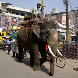 Neu Delhi Indien