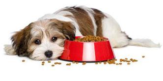 Lecker und gesund ist unser großes Sortiment an Hundefutter