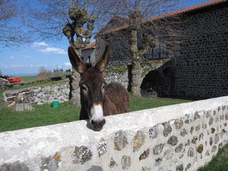 Photo d'un âne dans l'enclos du Gite de L'Escole