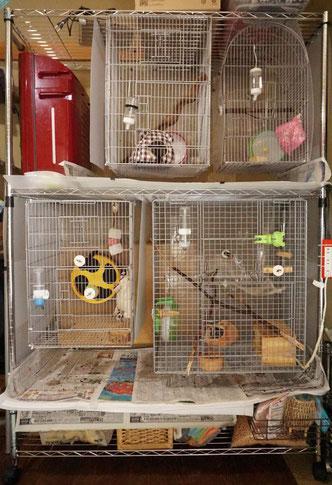 フクロモモンガ(sugarglider)の飼育環境 画像