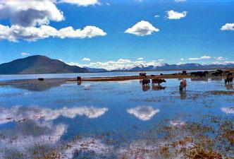 der Yamdok-See - das grüne Juwel Tibets