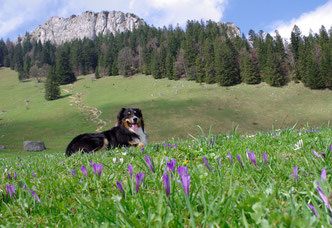 Heuberg Wandern mit Hund
