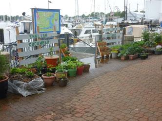 Hampton Public Piers Marina mit Gemüsegarten für die Segler