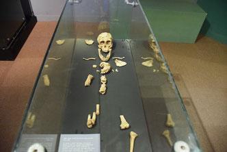 Люси - самый древний сохранившийся скелет человека