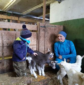 Junge Ziegen im Stall