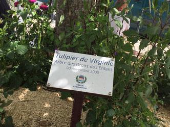 http://maisondesdroitsdelenfant.ouvaton.org/la-maison-des-droits-de-lenfant/notre-histoire.html
