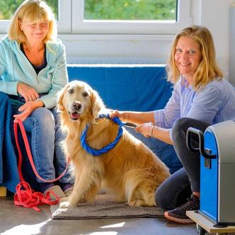 Kunde, und Trainer bei Rehatronanwendung beim Hund