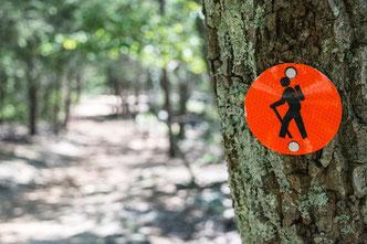Ein Wander-Schild an einem Baum