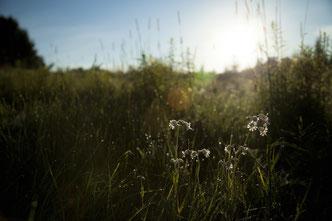 Der Sommer bietet Erholung in freier Natur - das machen auch wir uns zu Nutze (Bild: Unsplash.com)