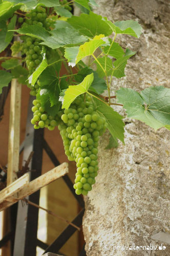 Mosel Wein Radweg Radfahren und Genuss