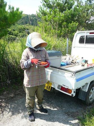 除虫菊...蚊取り線香を準備している妻・操さん
