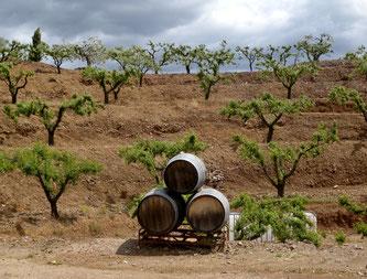 25. April 2017 - Priorat, eine wenig bekannte Weinregion mit Kultweinen