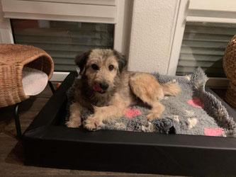Archie im neuen Zuhause