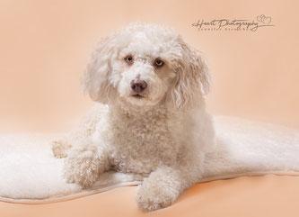 Hundefotografie, Tiere im Studio, Tierfotografie, Hunde im Studio
