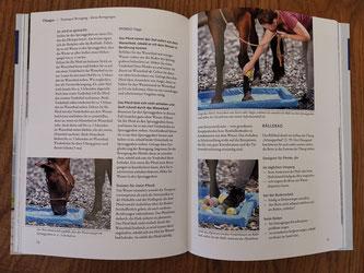 """Einlick Buch """"Mehr Körpergefühl für mein Pferd"""" - Übungen für die Basissinne"""
