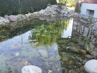 Teich Garten Wasserpflanzen Naturstein