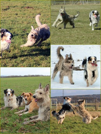 Lotta mit Hundefreunden