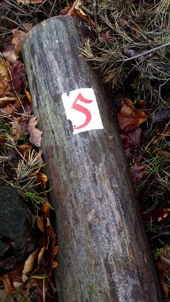umgestürzter Baum mit Wegezeichen, Wegbezeichnung, Wegenetz, Alte Fünf,