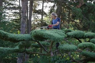 Taille japonaise de mise en forme sur Juniperus conduit en nuages