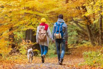 Beautiful couple in autumn nature © Halfpoint  95488178  / fotolia