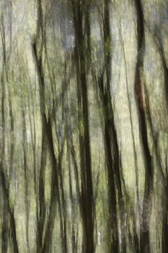 """""""Immersion"""". 2017. Photographie numérique. 3 exemplaires. Tirage 60x90 cm, papier Hahnemühle."""
