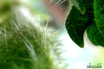 Ateliers initiation plantes médicinales recettes cueillette transformation cosmétiques baumes sirop tisanes macérats élixirs floraux vitalité bien être haute garonne occitanie saint gauden