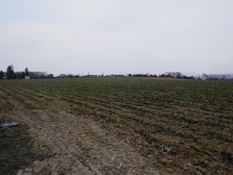 畑会場を反対側から見てみました。
