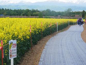 駐車場から見晴台へ向かう通路です。畑の中には入らないでください。