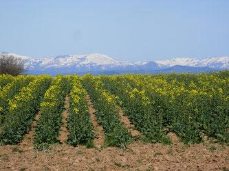 暑寒別連山の残雪もきれいに見えます。