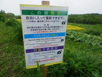 この看板のある畑は立ち入り自由です